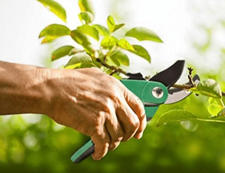 Mockins Pruning Shears review